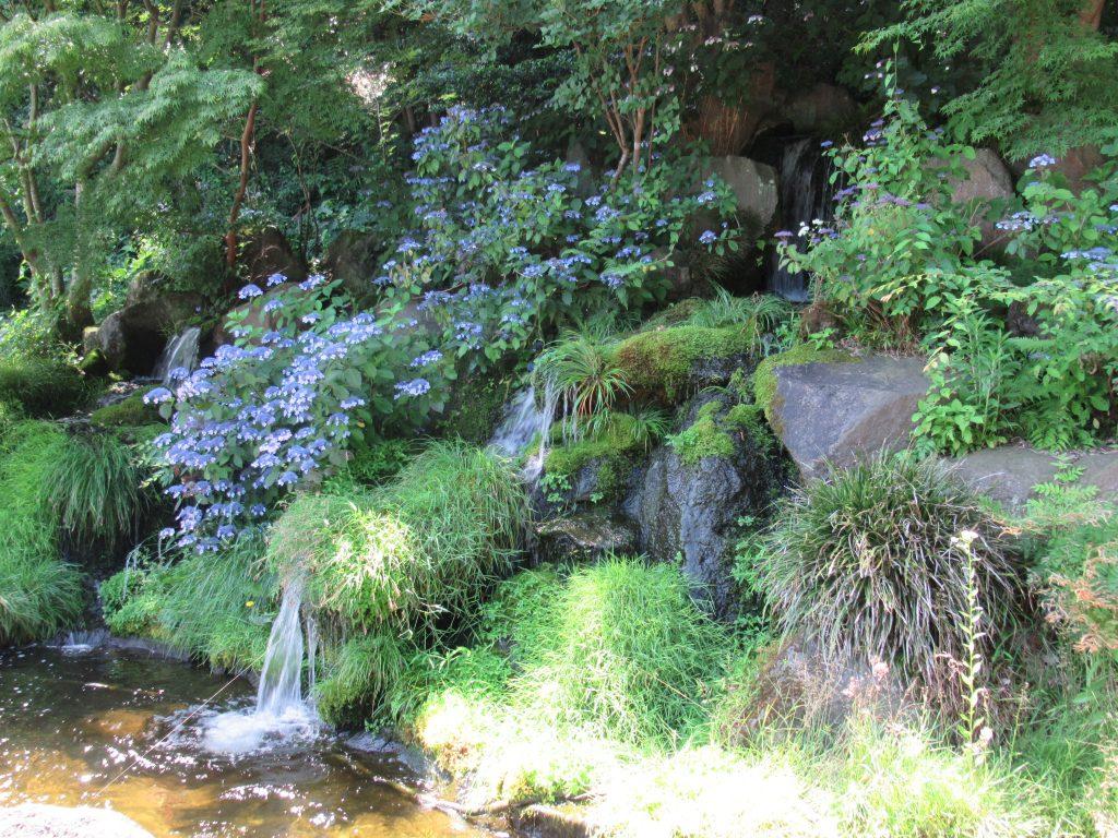 宝生池のあじさいを見ながら、滝で一息 R2.6.11撮影